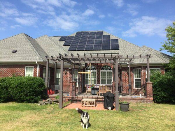 Cute Dog With Solar